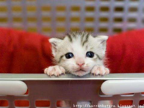 横耳のカワイイ子猫の写真 <親ばか