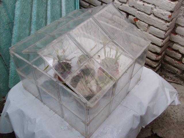 Invernadero Casero Materiales Invernadero Casero y Casi