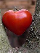 zum HerzBaum