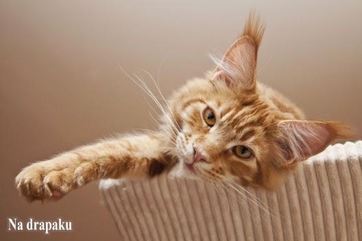 Czy hodowcy kochają koty?