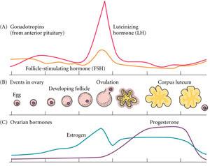 Sincronizacion del ciclo menstrual