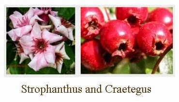 Strophanthus Craetegus homoeopathic heart remedies