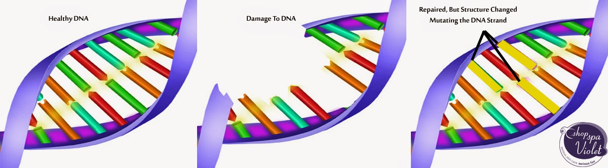 DNA Strand Mutation from Free Radical Damage