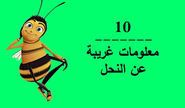 المعلومات الغريبة عن النحل Gvhkhj%253Bkhkl