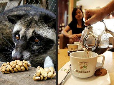 fakta kopi mahal di dunia