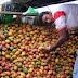Banco Mundial: RD es incapaz de cumplir medidas fitosanitarias