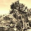 Βουτιά στο χρόνο: Το Γεράκι το 1902