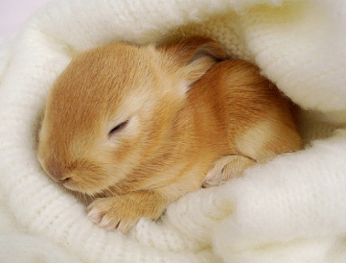 Small bunny.