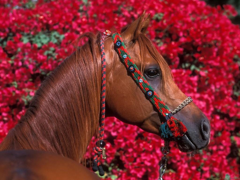 http://1.bp.blogspot.com/-dH58IdW0OI4/TlPcx-8jVnI/AAAAAAAAHEU/oaTAG9VUnA4/s1600/Latest+red+Flower+Wallpaper2.jpg