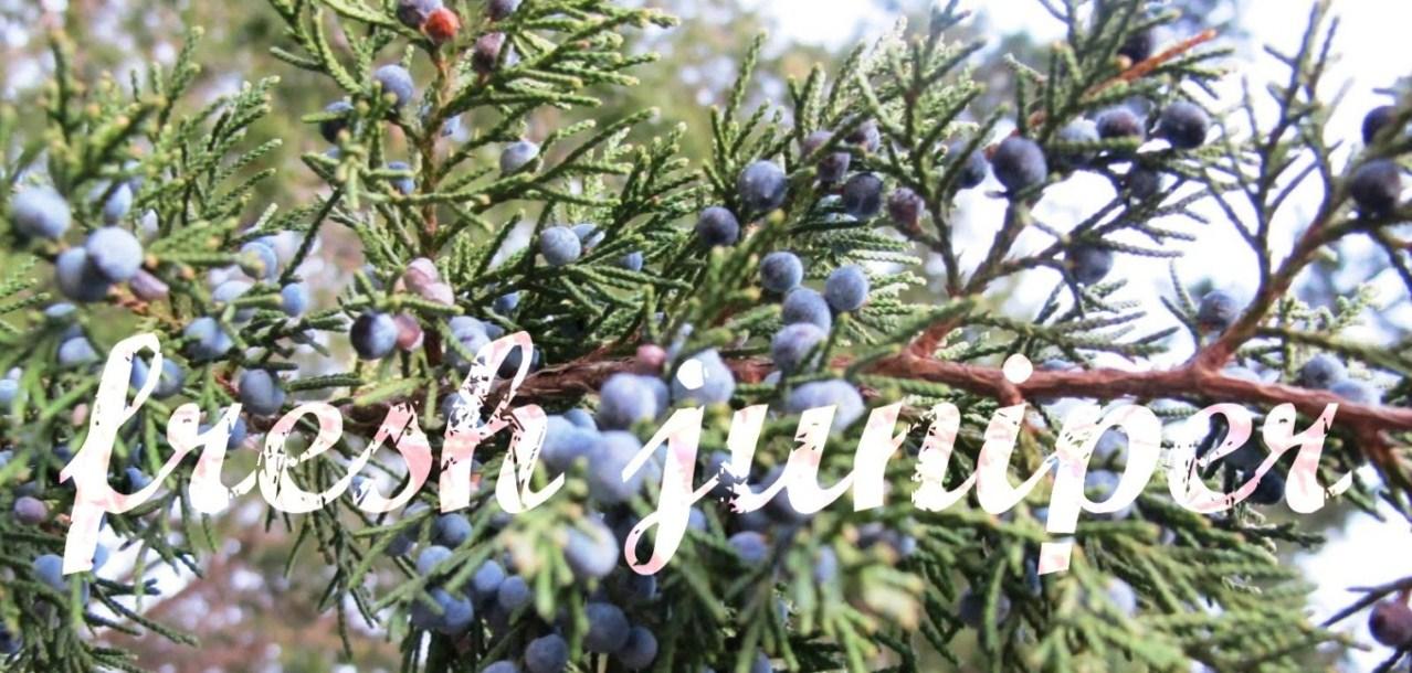fresh juniper