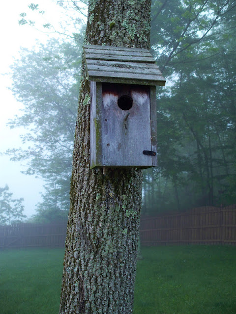Birdhouse in the early morning fog
