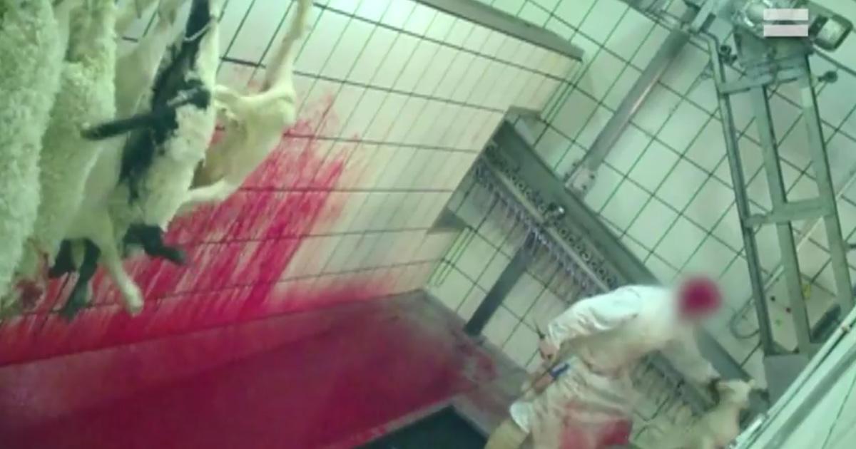 Mayores controles en los mataderos de España