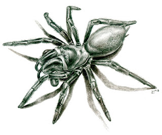 Friularachne Arañas prehistoricas