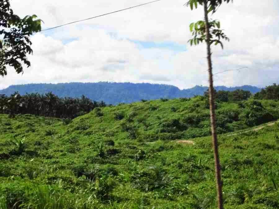 Mt. Magdiwata Agusan del Sur