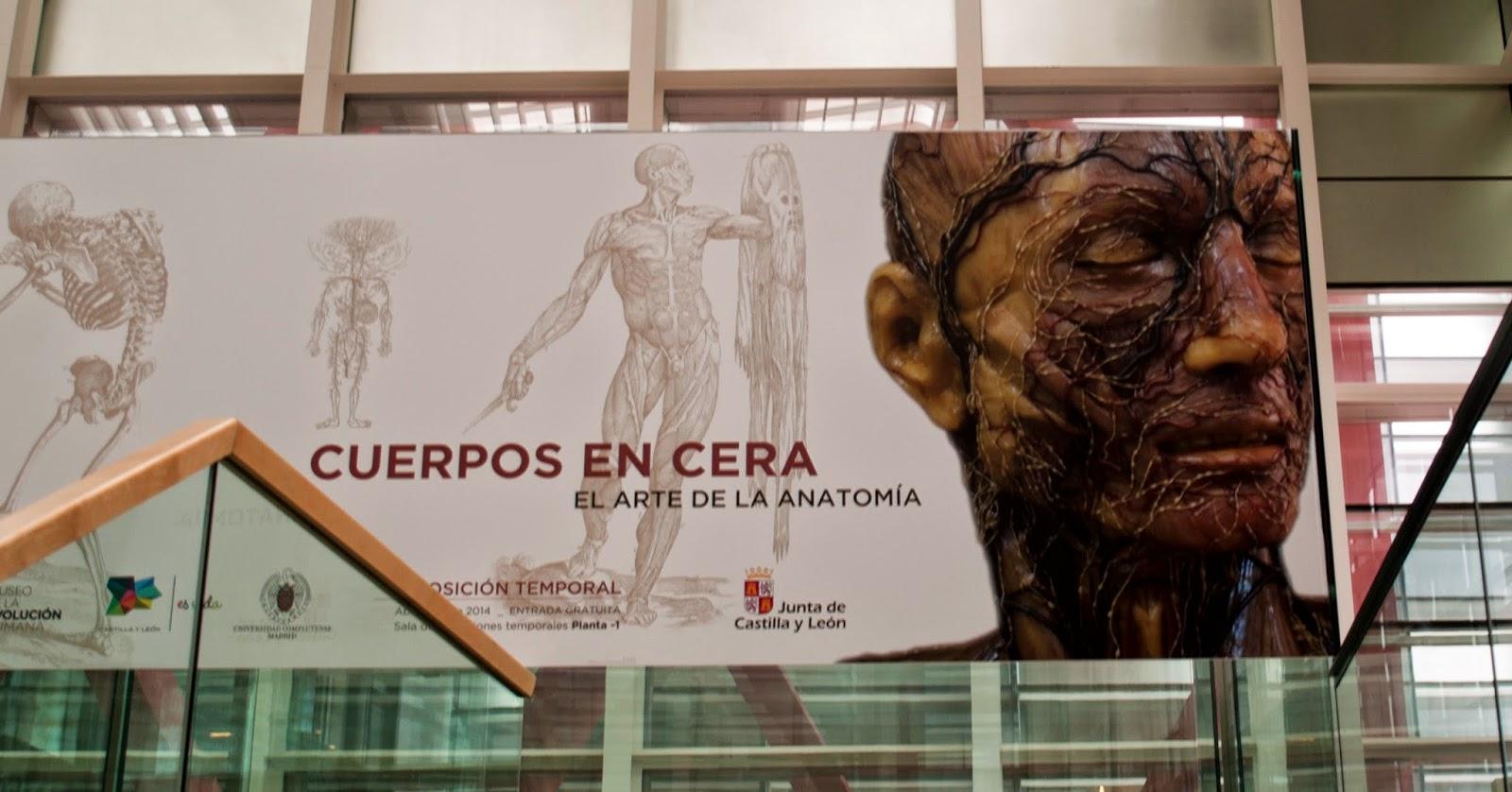 Freakland Scenics: Cuerpos en cera: El arte de la anatomía