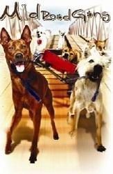 Chú Chó Bất Hạnh - Mid Road Gang