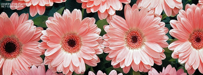 pink flower facebook coverVintage Photography Flowers Facebook Covers