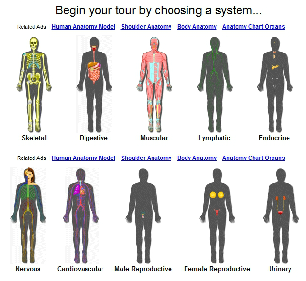 Educational Technology Guy: InnerBody - Human Anatomy and Physiology ...