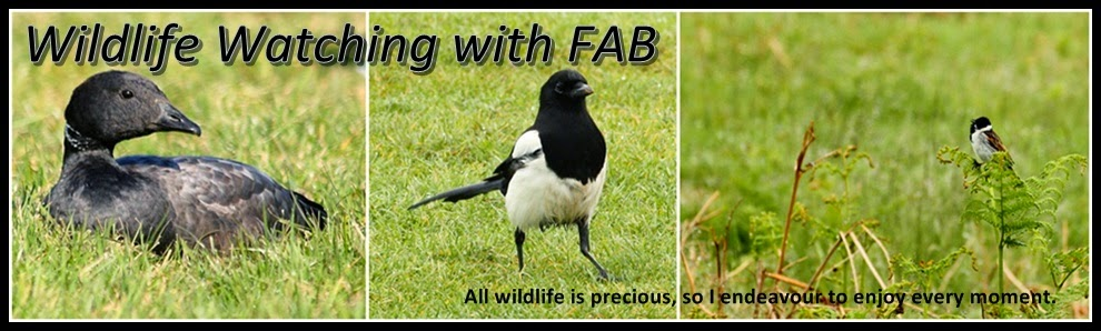 Wildlife Watching with FAB.