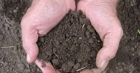 Makalah peranan bahan organik terhadap kesuburan tanah