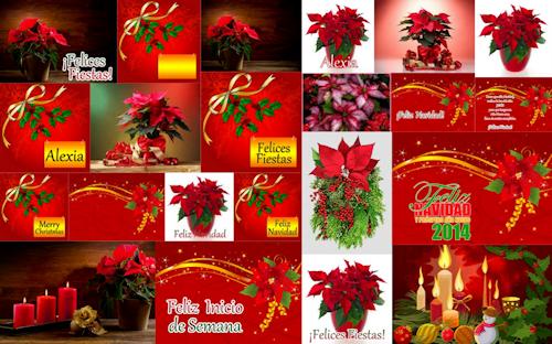 Postales con mensajes de Navidad en flores Nochebuenas rojas