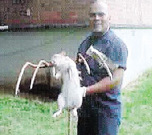 Tikus Gergasi Dibunuh Di New York