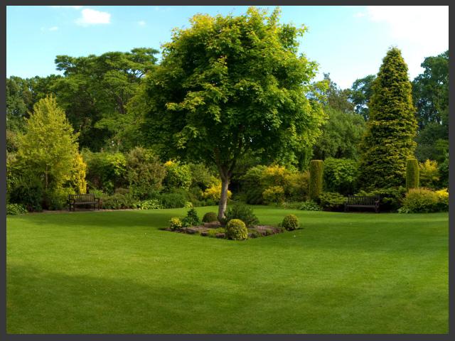 javier galarza parte ii rboles plantas ornamentales y