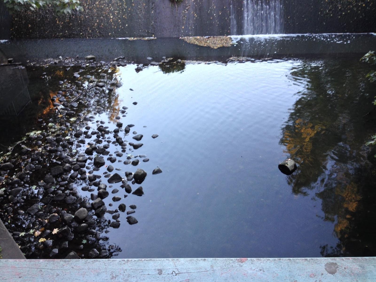 Stauwehr, Wasser, Steine im Wasser