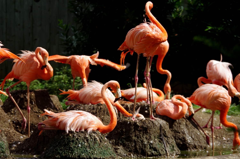 Flamingo nest - photo#14