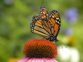 Progetto vajra perle nel tempo immagini foto art gallery incontri meditazione contemplazione zen farfalla