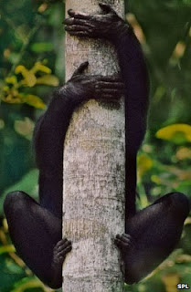 Bonobos have bendy feet