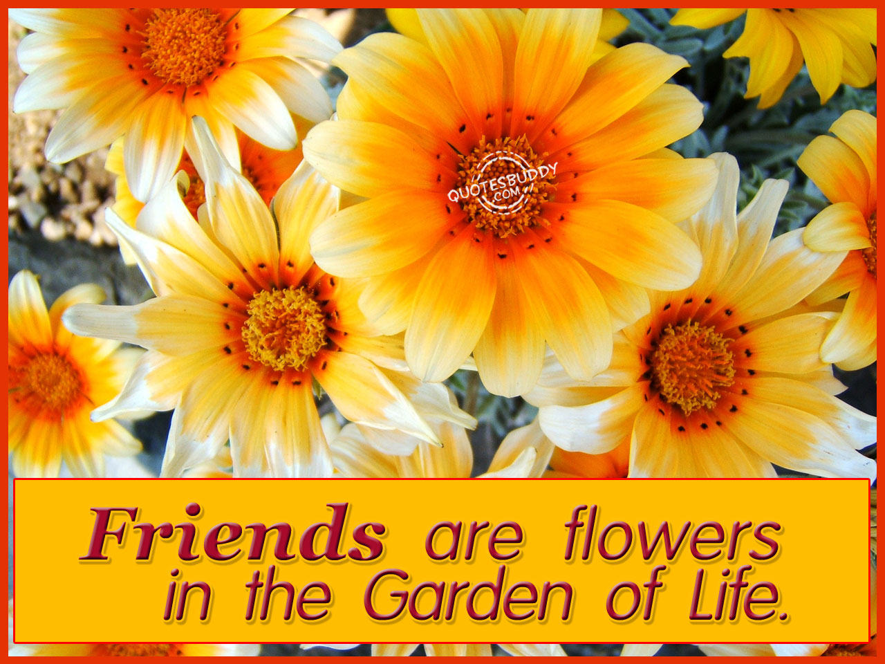 Gold in the clouds flowers in the garden of life - Flowers that mean friendship ...