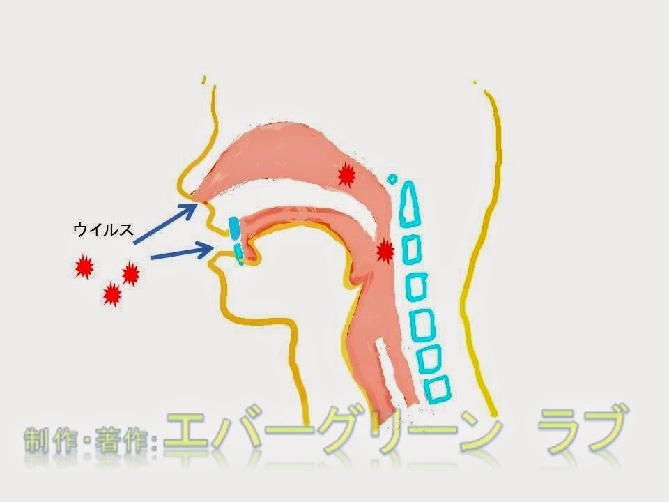 ウイルス 感染 かぜ 鼻水 眠くなる 眠くならない 抗菌薬 のどが渇く のどが乾燥する カラカラ 便秘 抗コリン薬 抗生物質 常在菌 ウイルス ロイコトリエン ドリエル 睡眠補助薬 鼻炎用スプレー ステロイド プソイドエフェドリン 医者の薬 OTC 総合感冒薬 止まらない 1日1回 ウイルス 感染 かぜ 風邪 鼻水抗ヒスタミン薬 ジフェンヒドラミン 鼻づまり プソイドエフェドリン塩酸塩 鼻炎用スプレー (ステロイド) ベクロメタゾンプロピオン酸 エステル d-クロルフェニラミンマレイン酸塩  抗コリン薬 分泌抑制  ベラドンナ アルカロイド ヨウ化イソプロパミド フマル酸 クレマスチン、 マレイン酸 カルビノキサミン メキタジン 抗アレルギー薬 アゼラスチン 塩酸塩  ケトチフェン フマル酸塩 エメダスチンフマル酸塩 セチリジン塩酸塩 フェキソフェナジン塩酸塩 エピナスチン塩酸塩 風邪 鼻水 肥満細胞 杯細胞 鼻腺 鼻水 鼻づまり 副交感神経 感染 風邪 肥満細胞 杯細胞 鼻腺 鼻水 鼻づまり 副交感神経 感染 風邪 かぜ抗ヒスタミン薬 ジフェンヒドラミン 鼻づまり プソイドエフェドリン塩酸塩 鼻炎用スプレー (ステロイド) ベクロメタゾンプロピオン酸 エステル d-クロルフェニラミンマレイン酸塩  抗コリン薬(分泌抑制) ベラドンナ総アルカロイド ヨウ化イソプロパミド フマル酸クレマスチン、 マレイン酸カルビノキサミン メキタジン 抗アレルギー薬 アゼラスチン塩酸塩 ケトチフェンフマル酸塩 エメダスチンフマル酸塩 セチリジン塩酸塩 フェキソフェナジン塩酸塩 エピナスチン塩酸塩 かぜ 抗ヒスタミン薬 ジフェンヒドラミン 鼻づまり プソイドエフェドリン塩酸塩 鼻炎用スプレー (ステロイド) ベクロメタゾンプロピオン酸 エステル d-クロルフェニラミンマレイン酸塩  抗コリン薬(分泌抑制) ベラドンナ総アルカロイド ヨウ化イソプロパミド フマル酸クレマスチン、 マレイン酸カルビノキサミン メキタジン 抗アレルギー薬 アゼラスチン塩酸塩 ケトチフェンフマル酸塩 エメダスチンフマル酸塩 セチリジン塩酸塩 フェキソフェナジン塩酸塩 エピナスチン塩酸塩
