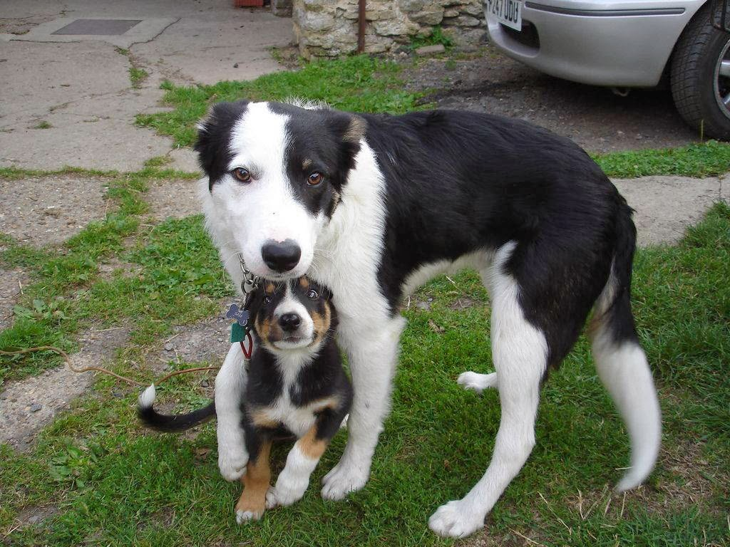 Cute dogs - part 9 (50 pics), puppy with his dog bodyguard