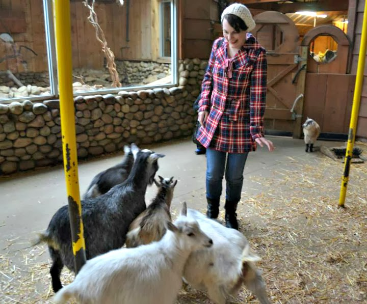 Suzanne Amlin, Colasanti's, feeding goats, A Coin For the Well, baby animals, Leamington Ontario, Windsor bloggers, Windsor Ontario blog, Tulle red blue and white plaid winter coat, Modcloth coat, Senior Speechwriter Coat
