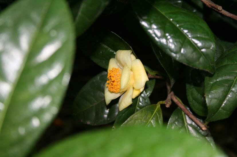 Hotel I Rododendri Valfurva Tripadvisor