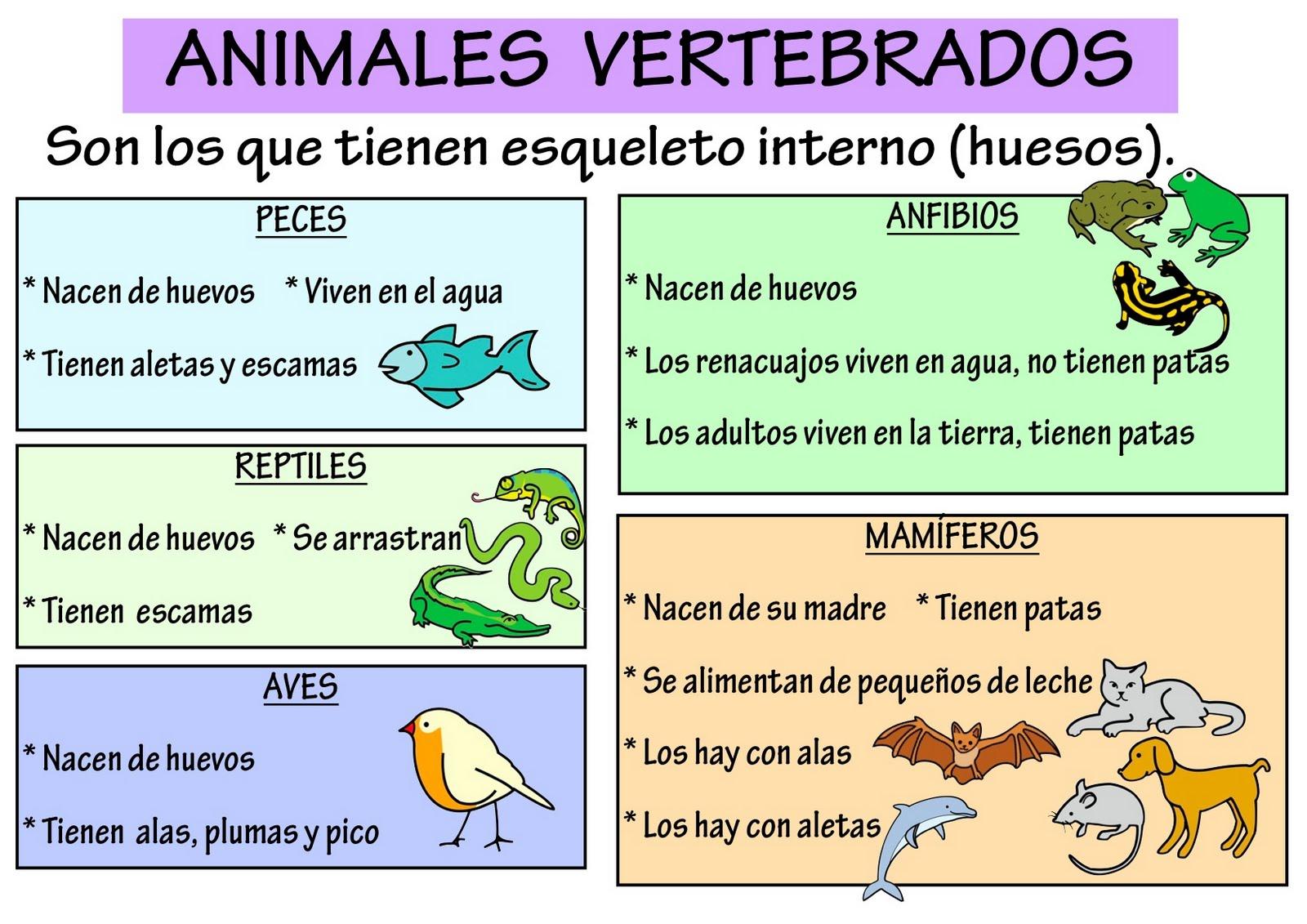 Animales vertebrados: ANIMALES VERTEBRADOS