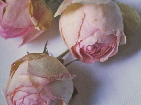 Personally selected products significado del color rosa - Color rosas significado ...