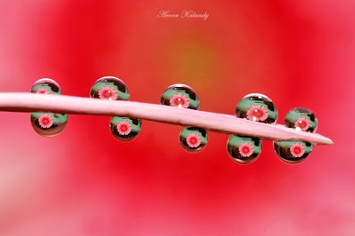 macro water droplets on flowers