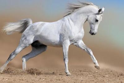 White Horse Wallpapers Gratis Gambar Background Wallpaper