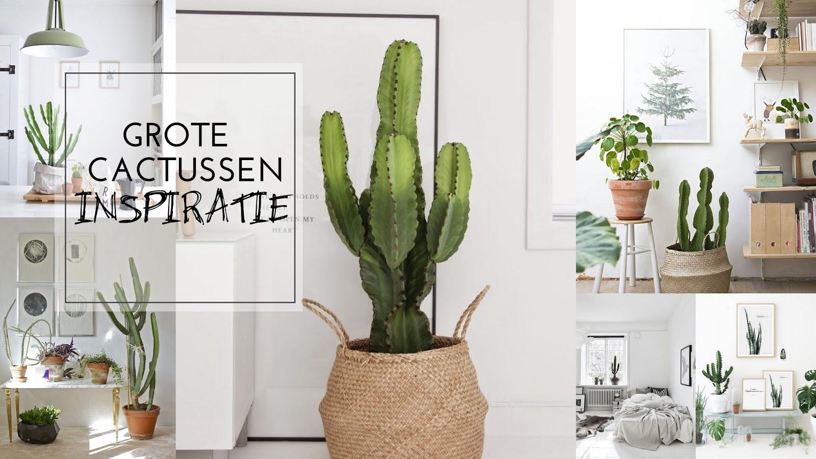 Inspiratie: grote cactussen   judith huls