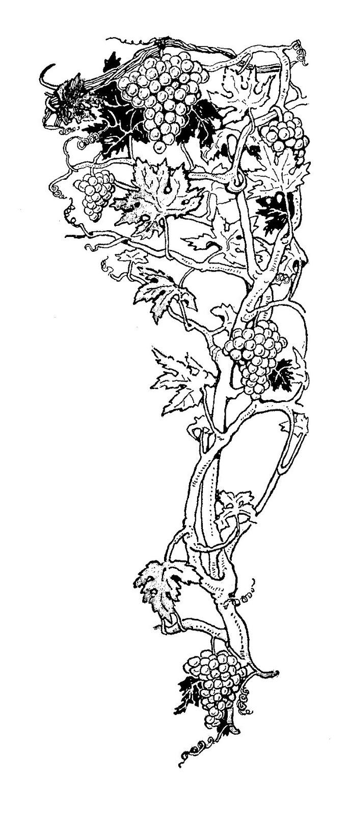 Grape Vine Clipart Grape vine corner design