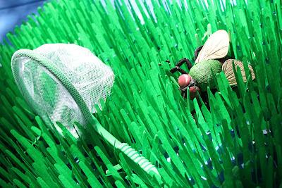 A Bug Birthday Party Elizabeth Lauren
