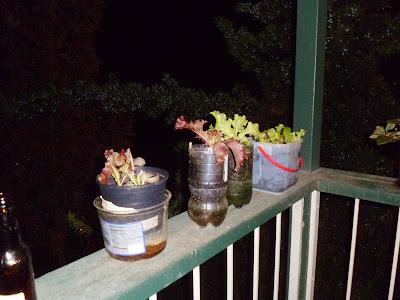 Lettuce on railing