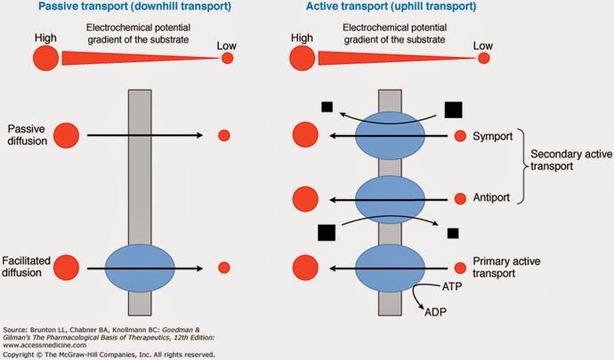 Vận chuyển vật chất qua màng tế bào -Tài liệu ôn thi bác sĩ nội trú - Môn Y sinh học Di truyền