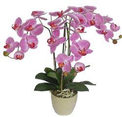 Orquideas poda