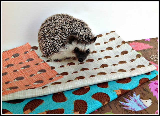 cute hedgehog sitting on hedgehog fabric