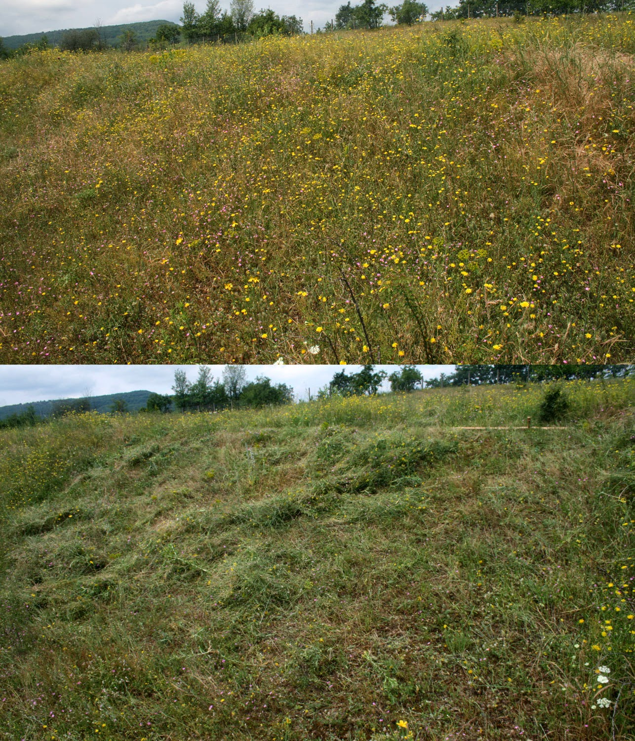 The bank before and after scything