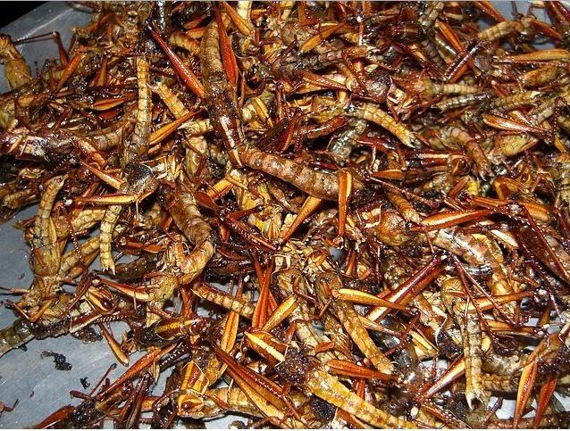 Los insectos que comemos diariamente sin saberlo