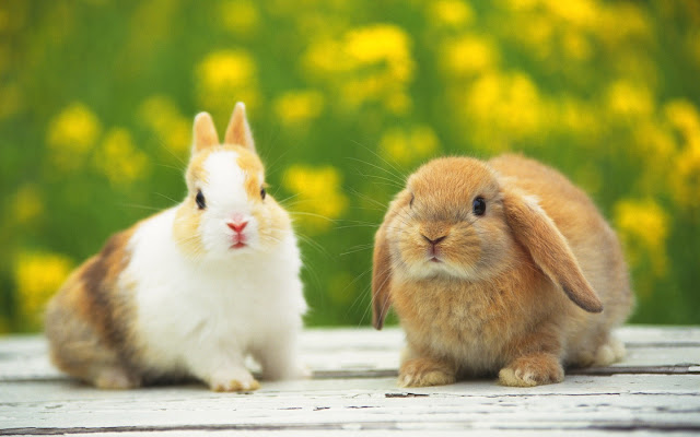 Cute Rabbits 3